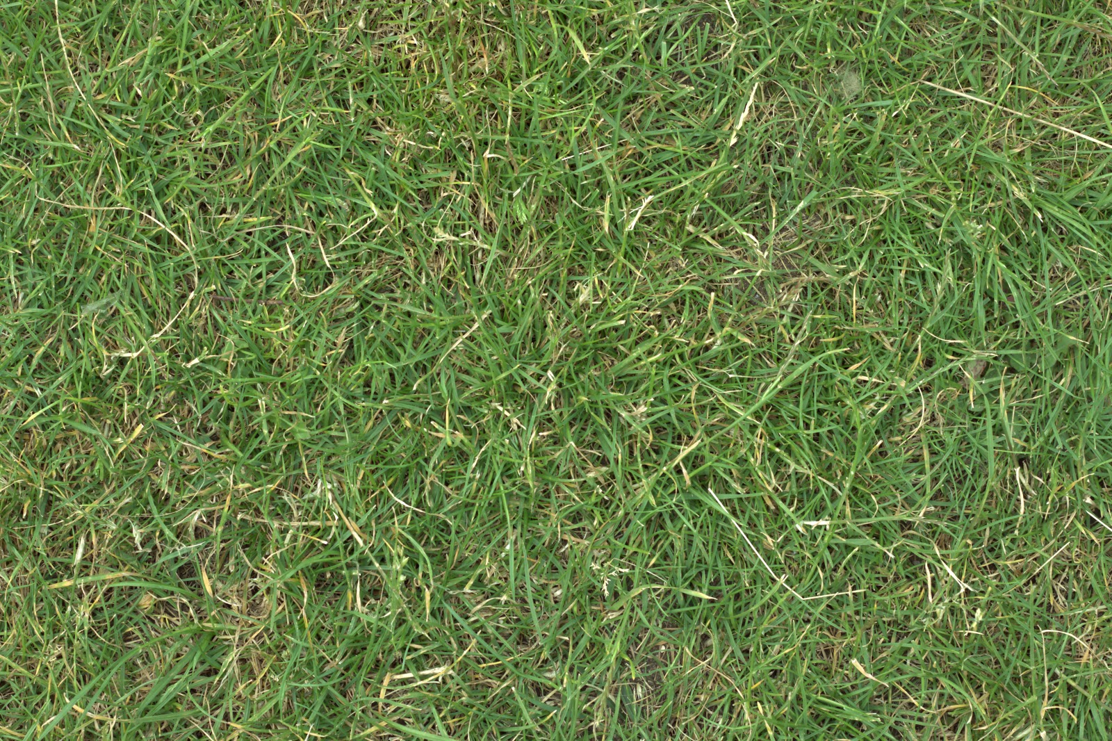 Grass turf lawn green ground field texture ver 1