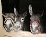 Meet the Donkeys