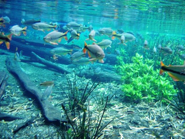 Papel de parede de animado de aquário marinho