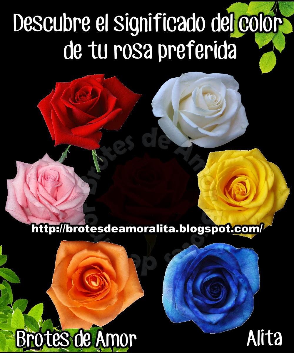 El significado de las rosas segun su color share the - Significado de los colores de las rosas ...