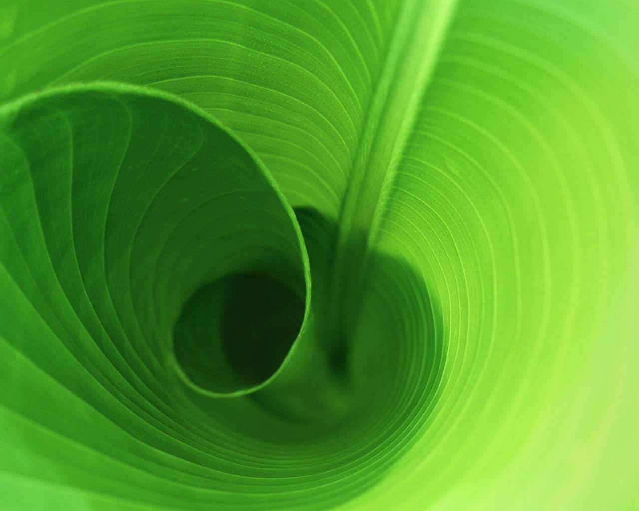 Papel de parede Folha verde