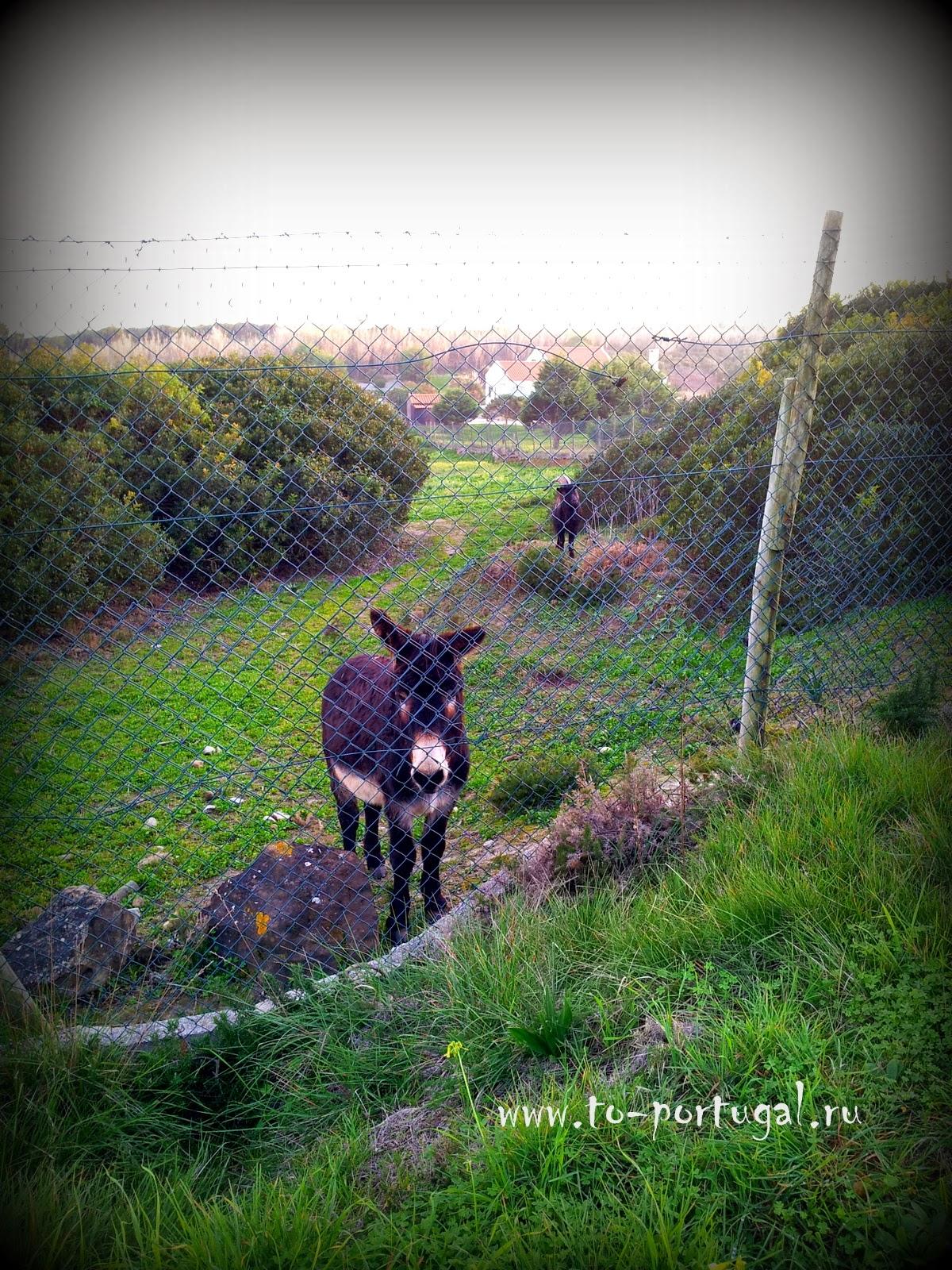 животные в Португалии, природа Португалии