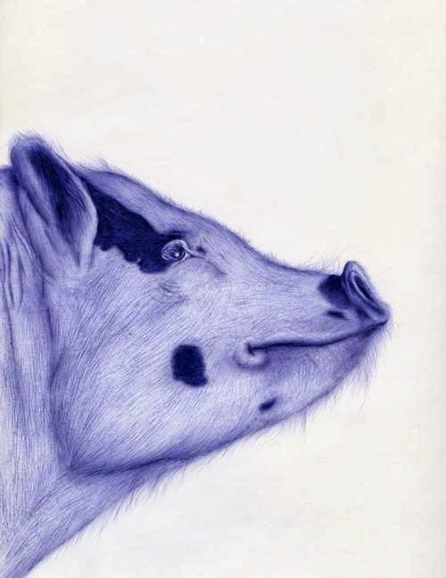 12-Pig-Sarah-Esteje-ABADIDABOU-Hyper-realistic-Ballpoint-Pen-Animals-www-designstack-co