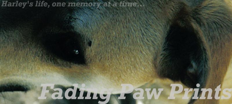 Fading Paw Prints