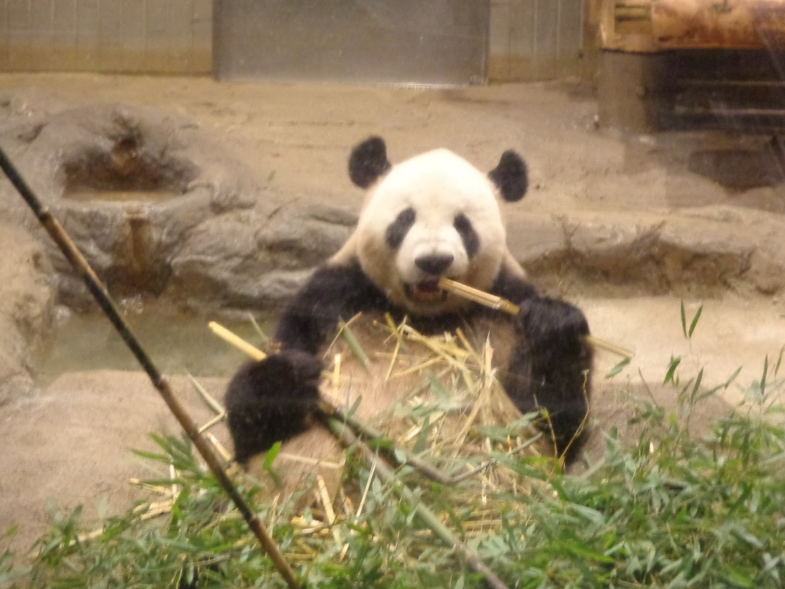 Nutrition, Food, Travel and More: Tokyo Ueno Zoo