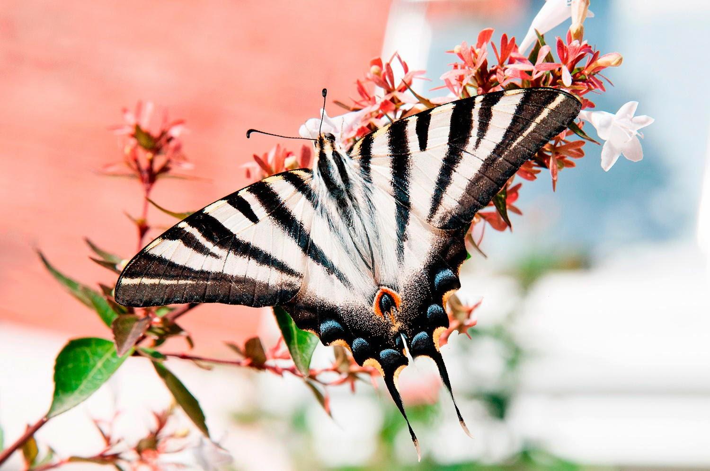 Imagenes de las mariposas mas bonitas del mundo - Imagenes de mariposas de colores ...