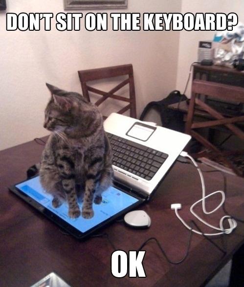 http://4.bp.blogspot.com/-Xsqu7xVlF4g/TwmOG7lDfqI/AAAAAAAAALU/jAr5XxsQ2Mg/s1600/Dont-Sit-On-The-Keyboard.jpg