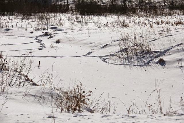 tendrils of deer trails