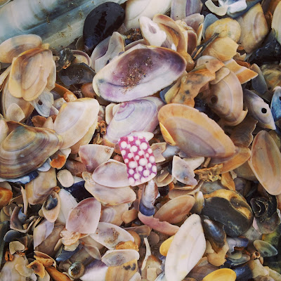 A 'polka-dot' shell fragment on the beach in Ireland. Photo by Elena Rosenberg.