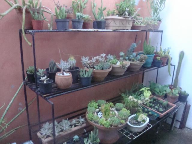 Jardim é Assim Cultivando e multiplicando cactos e suculentas