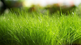 Macro Green Grass Bright HD Wallpaper