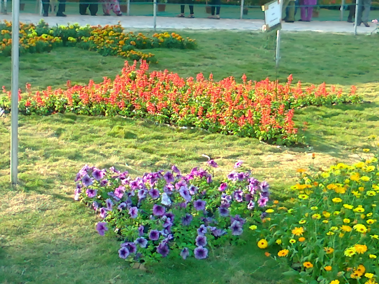 Ahmedabad Flower Show 2014