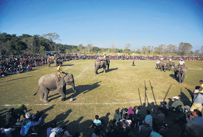 Gajah bermain bola sepak