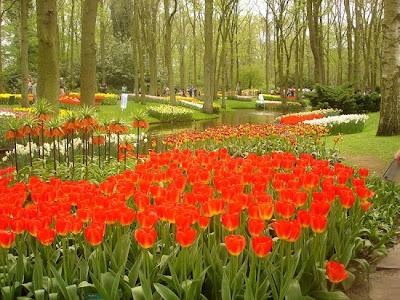 حديقة كيوكينهوف Keukenhof أكبر و أجمل حديقة أزهار في العالم. 8