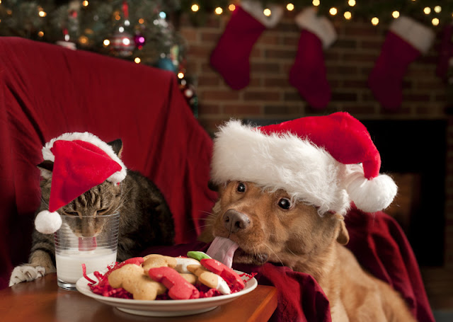 Christmas scene with a cat drinking milk and dog eating cookies