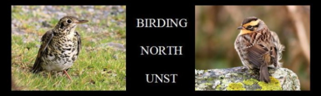 Birding North Unst