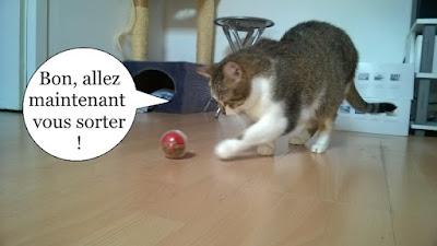 Chatte école du chat libre de toulouse