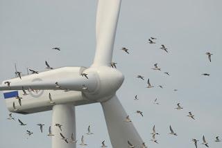 aerogeneradores y e impacto ambiental por las aves