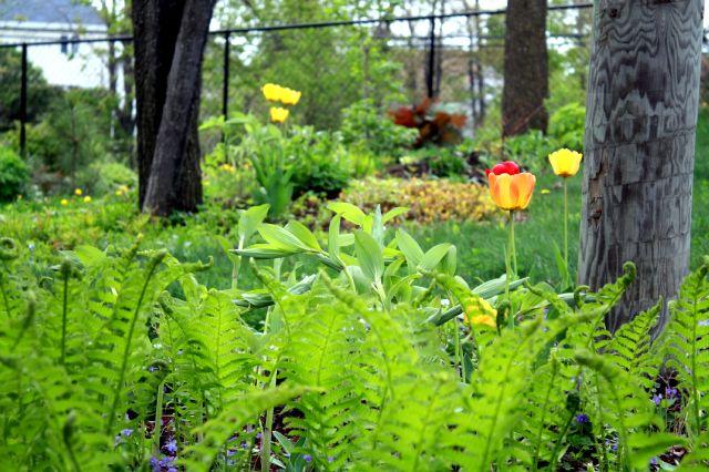 Mes passions petit tour du jardin - Petit jardin culinary arts tours ...