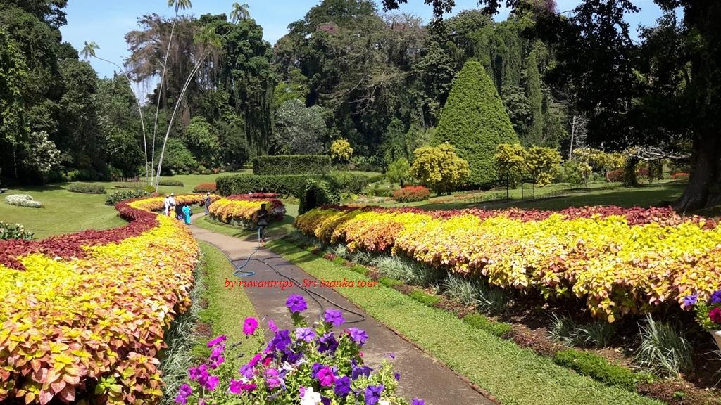 Royal Botanical Garden   Peradeniya
