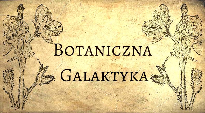 Botaniczna Galaktyka - SKLEP