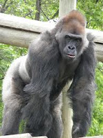 "Cherry Hill School Administrator Kevin Larson Fired After Allegedly Referring to Two Workers as ""Silverback Gorillas"""