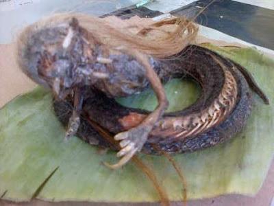Ular Berkepala Manusia ditemukan di Aceh Utara