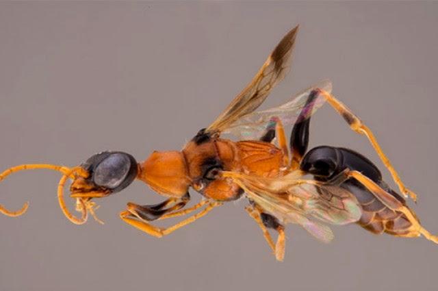 dementor wasp