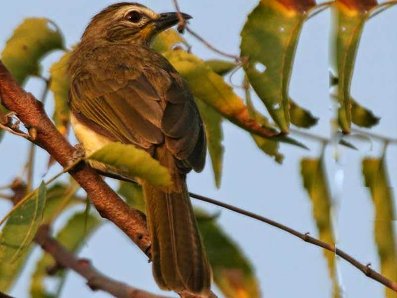 A bird perched on a tree in Kawal Wildlife Sanctuary