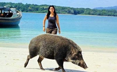 Tempat Wisata Pulau Peucang Tempat Rekreasi yang Indah dan Segar