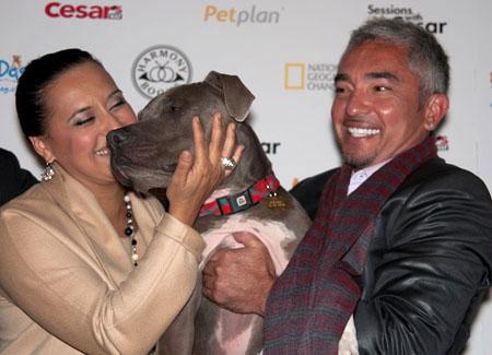 Cesar Millan S Dog Nation Imdb