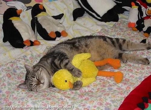 Funny cat and toys.