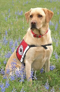 service dog posing in field