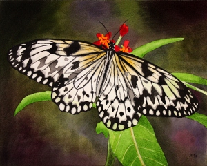 https://www.etsy.com/listing/247876661/butterfly-watercolor-painting-original?ref=listing-shop-header-0