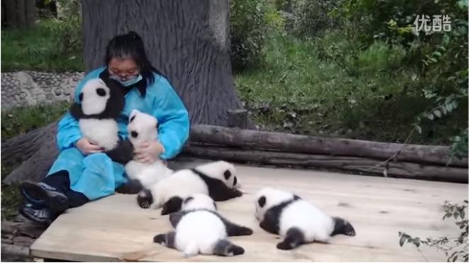 Panda caretaker