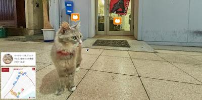Cat Street View