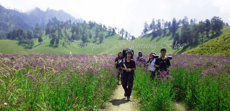 kawasan oro-oro ombo savana padang bunga levender gunung semeru puncak mahameru