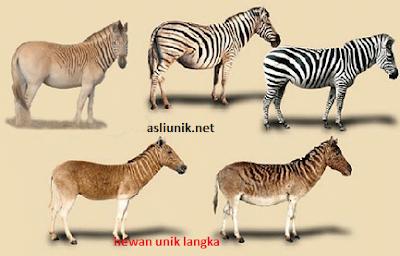 hewan unik dan langka