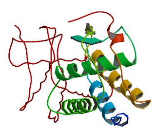 Computer generated image of the M-CSF protein
