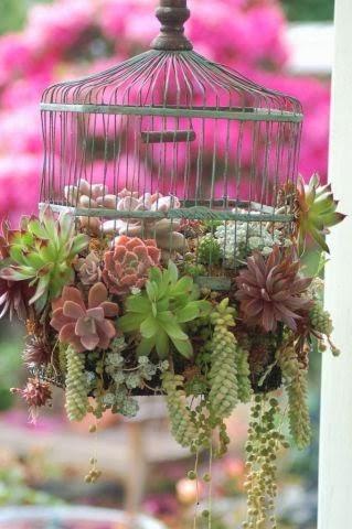kaktusi i sukulenti slike