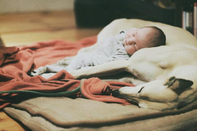 unique newborn photography melbourne