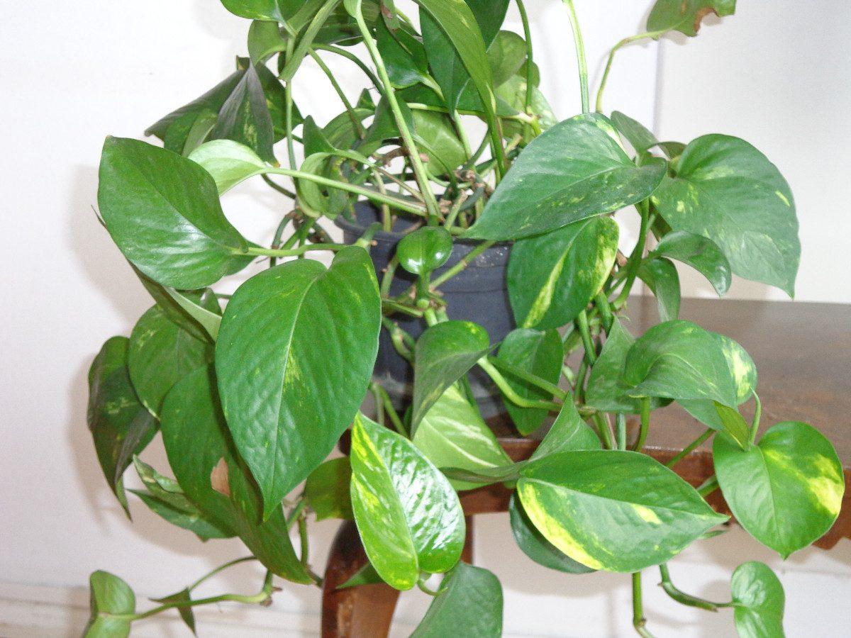 Intendencia con bel n recuperar las plantas tras las - Plantas para el salon ...