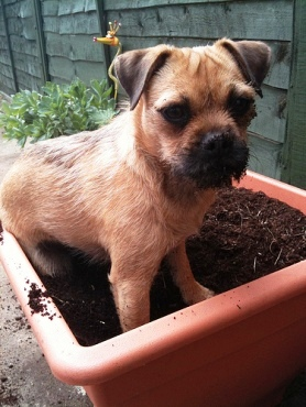 How To Stop Dogs From Digging Up Lawn