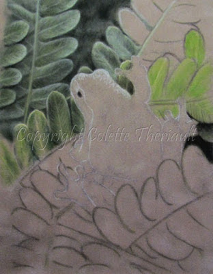 Amphibian Painting in pastel by wildlife artist Colette Theriault