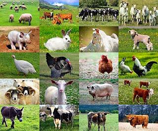 imagenes de animales domesticos