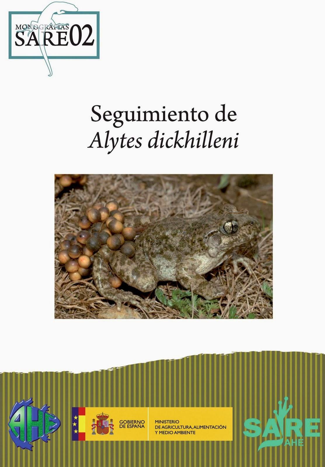 Seguimiento Alytes dickhilleni