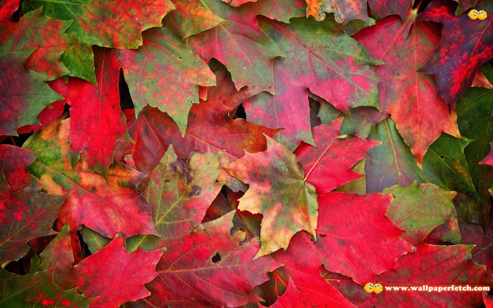 http://4.bp.blogspot.com/-XzLDiIYd7C4/TrxDRXZ4rQI/AAAAAAAAJfQ/dxH3qVT1j9Q/s1600/SuperPack_Beautiful_Nature_HD_Wallpapers_Part__80.58.jpg