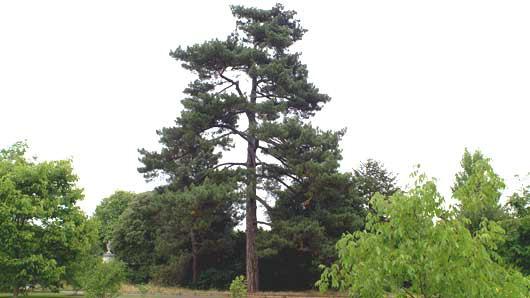Invernablog: Real Jardín Botánico de Kew
