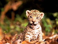 BABY ANIMALS COLLECTION (3) HD WALLPAPER