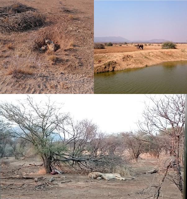 Erindi game lodge Namibia Aardwolf elephant lion